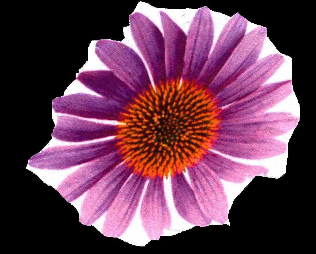 c0-20-flower