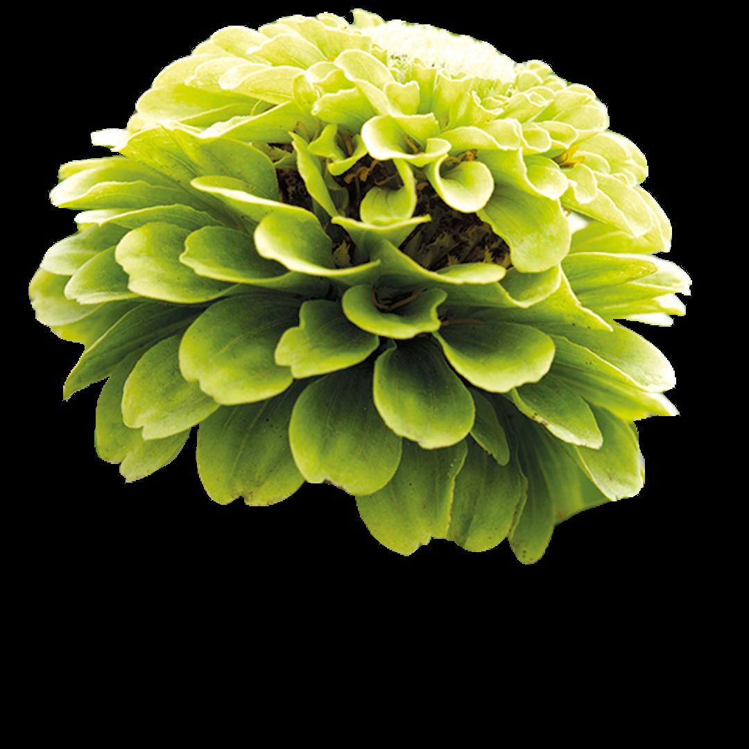 c0-20-flower-2