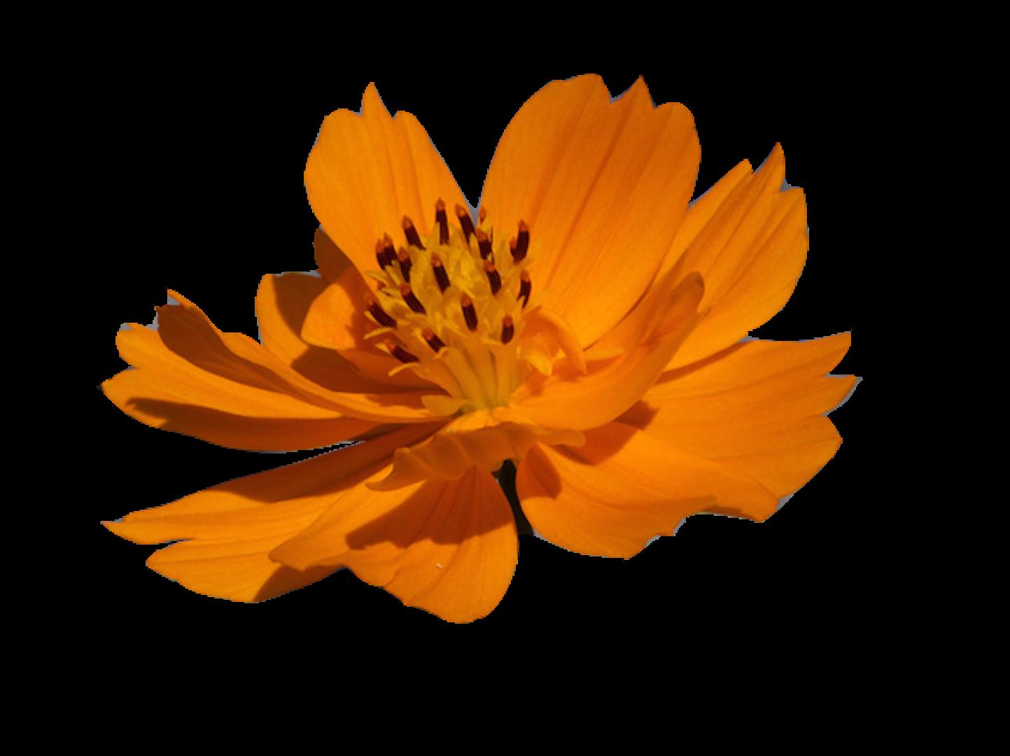 c0-20-flower-1